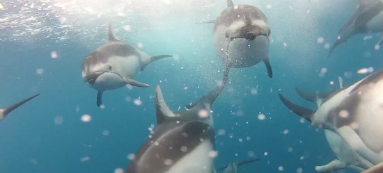 camara-gopro-delfines